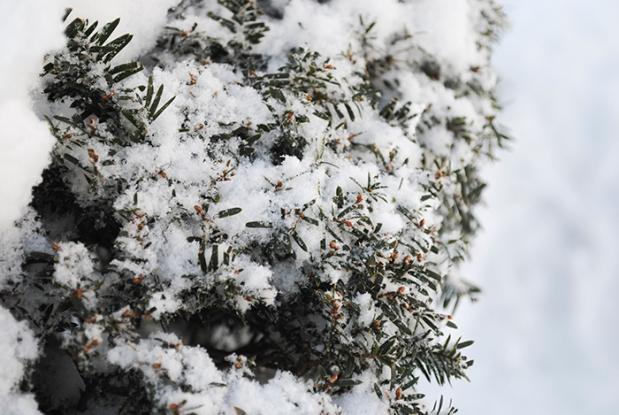 web_winterbush