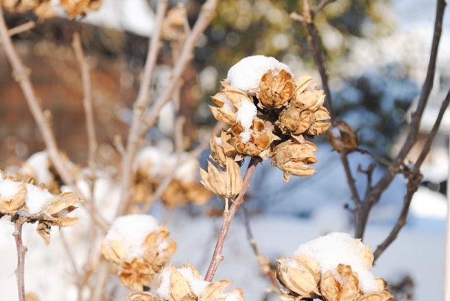 web_winterflower