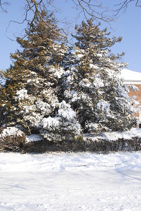winter, snow, photography