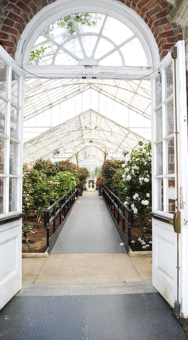 planting fields, oyster bay, long island, new york, camellia, floral, flower, greenhouse, nature