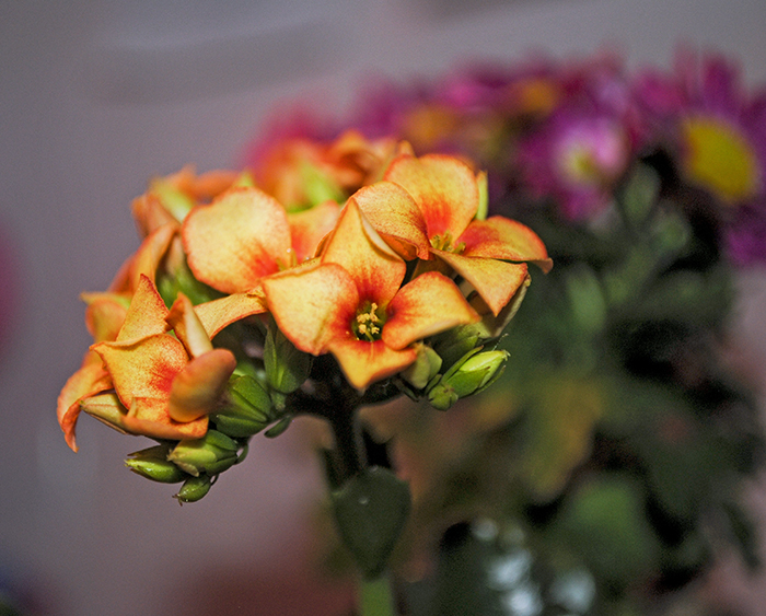 marketflowers_1