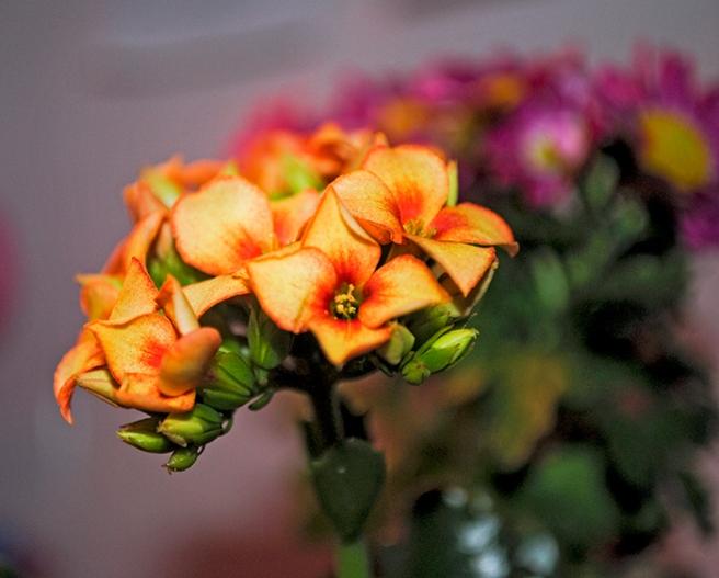 marketflowers_1