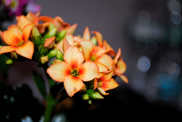 marketflowers_2