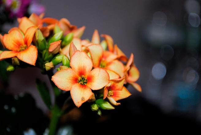 marketflowers_2