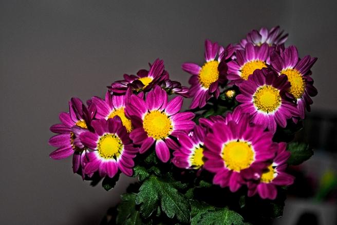 marketflowers_3