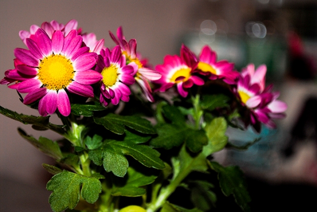 marketflowers_4
