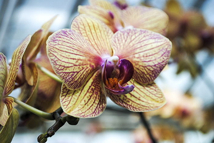 planting fields, oyster bay, long island, new york, orchid, floral, flower, greenhouse, nature