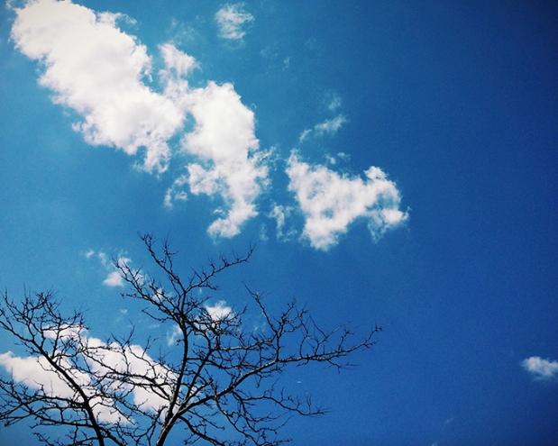sky, clouds, tree, river head, long island, new york