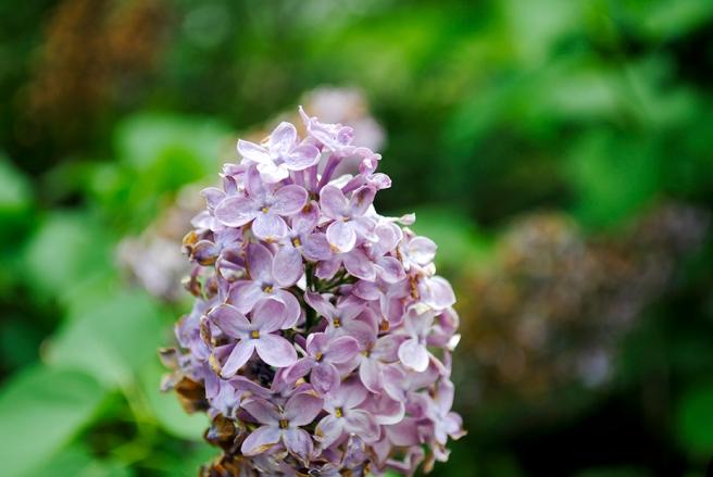 old westbury gardens, long island, new york, gold coast, flower, flowers, nature, plants, garden