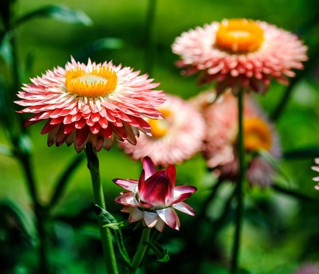 clark botanic garden, albertson, long island, new york, flower, flowers, floral, garden, nature, plants