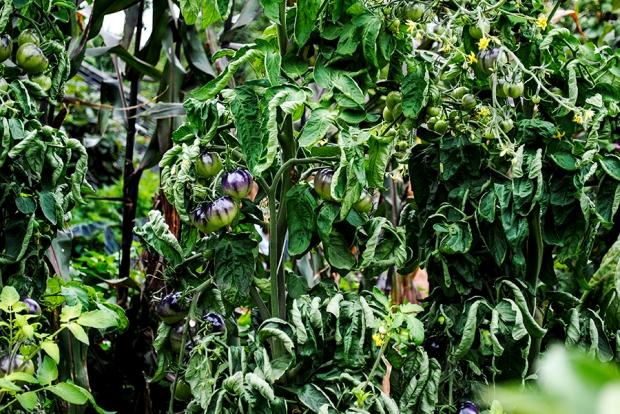 brooklyn botanic garden, brooklym, new york, flower, flowers, plant, nature, garden