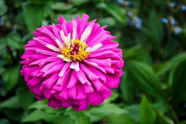 brooklyn botanic garden, brooklyn, new york, flower, flowers, garden, plants, nature