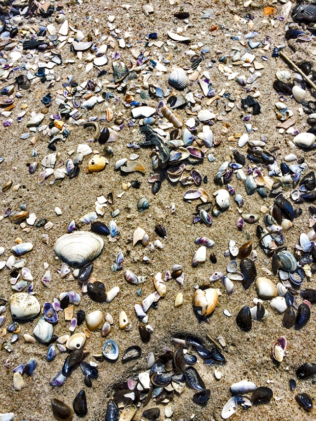 seashells, seashell, sea shells, sea shell, beach, ocean, sand, shell, shells, long beach, long beach ny, new york