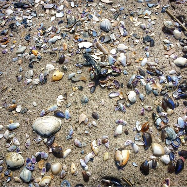 An abundance of sea shells by the seashore at the Volcom Unsound Pro surfing competition in September.