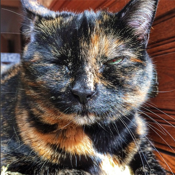 My cat Gracie mastering the eye wink.