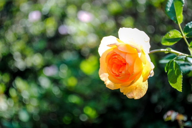 flowerfriday2_27