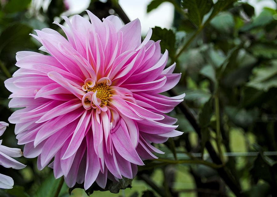 flowerfriday2_6