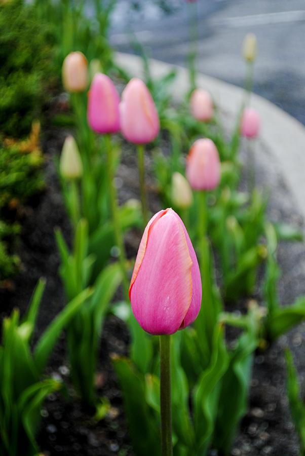 flowerfriday327