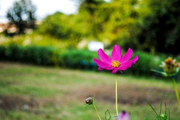 flowerfriday3_13
