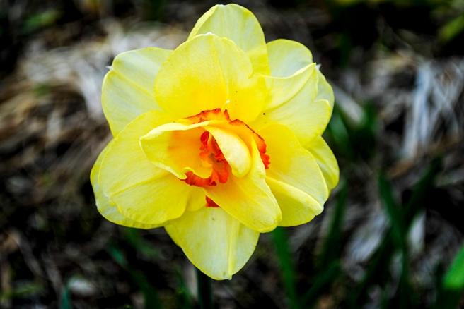 flowerfriday43