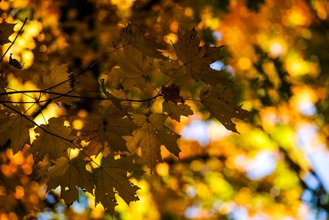 Autumn leaves, photo by Alyson Goodman.