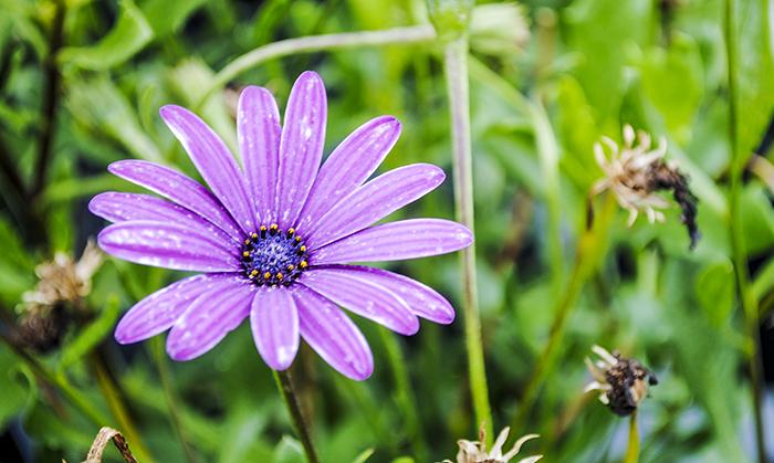 Helen's Flower Farm in Aquebogue, NY. Photo by Alyson Goodman.