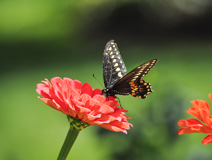 Clark Botanic Garden, Albertson, NY, photo by Alyson Goodman