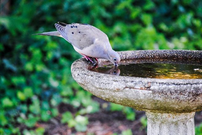 Bird at Clark Botanic Garden in Albertson, NY. Photo by Alyson Goodman.