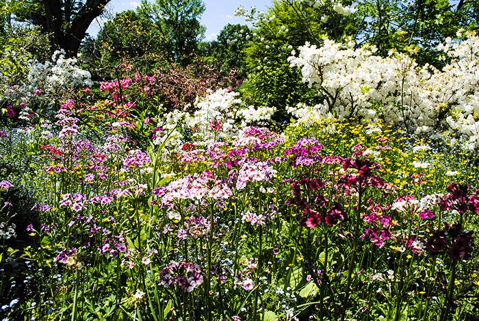 Old Westbury Gardens, photo by Alyson Goodman