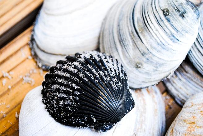 Sea shells in Long Beach, NY. Photo by Alyson Goodman.