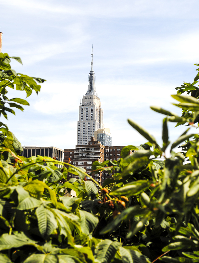 Empire State Building from The Highline. Photo by Alyson Goodman.