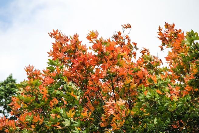 Autumn leaves, photo by Alyson Goodman