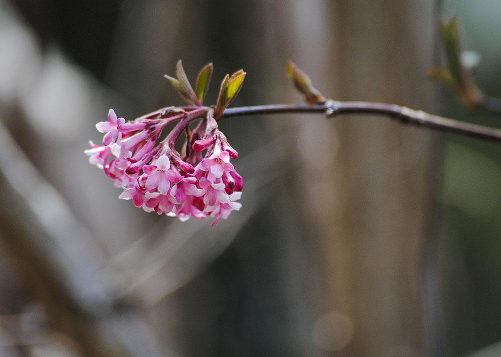 Clark Botanic Garden in Albertson, NY. Photo by Alyson Goodman.