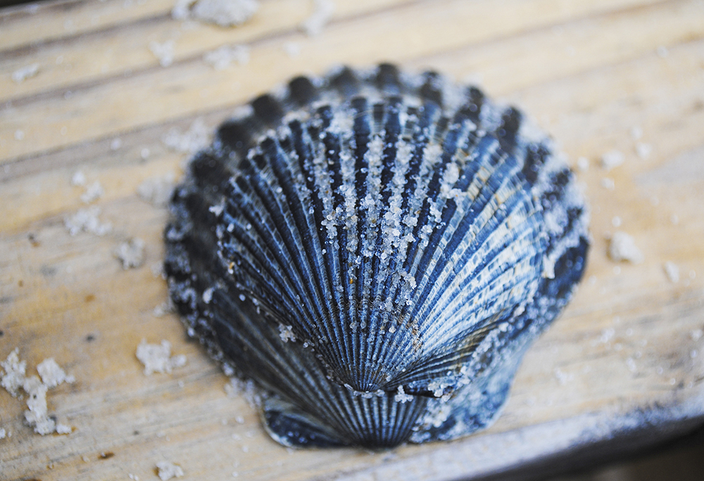 Seashells in Long Beach, NY. Photo by Alyson Goodman.
